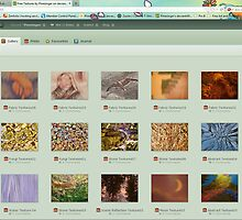 Free Textures/Backgrounds by Pamela Phelps