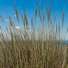 Dune Grass by JEZ22
