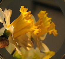 Daffy For Myself by Eileen McVey