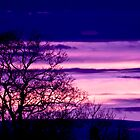 Purple Dusk by Vicki Field