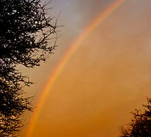 Rainbow at Dusk by Vicki Field