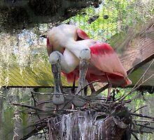 Nesting Roseate Spoonbills by Judy Wanamaker