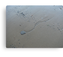 Water kite Canvas Print