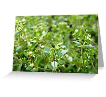 Life on the ground Greeting Card