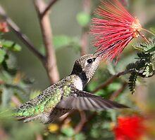 A Taste for Nectar  by Saija  Lehtonen