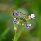Bee in Kirstenbosch, South Africa by Jessica Henderson
