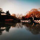 Shanghai Lake Colour by Melinda Kerr