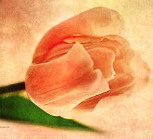 Dreamy Vintage Tulip by Romanovna Fine Art Prints