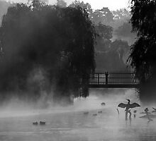 Misted Cormorants by kelvinLemur