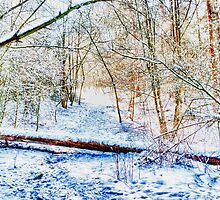 Forest in the Snow HDR by Vicki Field
