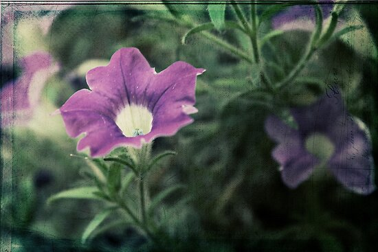 Purple Petunia  by Tangerine-Tane
