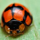 lady bird by musleam