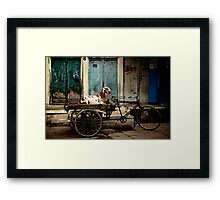 Goat on Wheels Framed Print