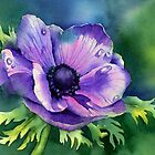 Purple Anemone by Ann Mortimer