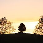 Lonely tree at sunset by Sonya Lynn Potts