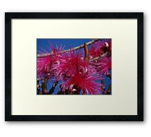Nature And Colours - Madre Naturaleza Y Colores Framed Print