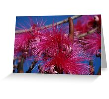Nature And Colours - Madre Naturaleza Y Colores Greeting Card