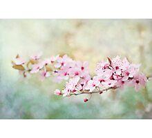 Spring Reverie Photographic Print