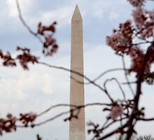 DC Spring - the Washington Monument by WalnutHill
