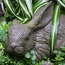 Bunny After The Rain by heatherfriedman