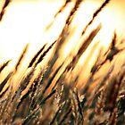 Summer Grass by Serenitas