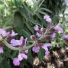 Sage In Bloom by Ilunia Felczer