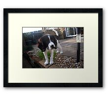 Benson my little Boy Framed Print