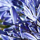 Violet Hues by Serenitas