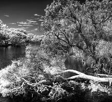 Canning River IR by BigAndRed