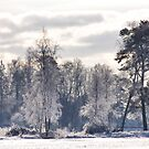 Frosted light  by LadyFi