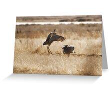 Monte Vista Sandhill Cranes 3 Greeting Card