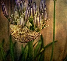 Springing Forth with Abundance by Wendi Donaldson