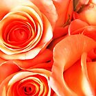 Orange Roses by Terri-Leigh Stockdale