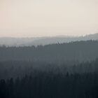 Layers of Forest by Liis