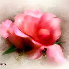 Opening Rose - Watercolour by MaureensArtz