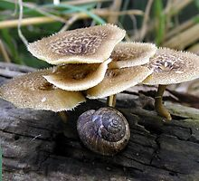 Spring Hexigonal Mushrooms and Muncher by Carla Wick/Jandelle Petters