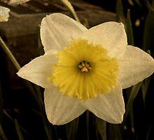 Bloom by Kerri Swayze