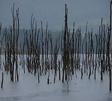Drowned Trees, Lake Jounama, Snowy Mountains, Australia. by kaysharp