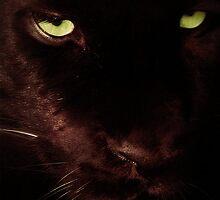 Panther by John Dickson