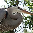 Great Blue Heron No.4 by Sheryl Unwin