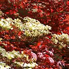 Dogwoods amidst Red Japanese! by Ruth Lambert