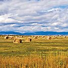 Hay is for Horses by Bryan D. Spellman
