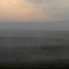Misty Morning Leadburn by photobymdavey