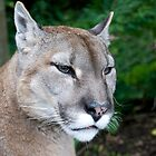 Portrait Of A Puma by Robert Taylor