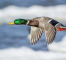 Bye Bye Birdie by Daniel  Parent