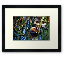 Reflections of a Mandarin Duck Framed Print