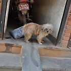 Dog in Nepal by Mark  Mazzone