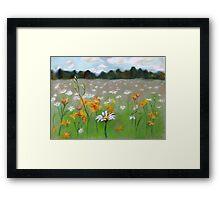 Camomile field. Framed Print
