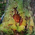 Kangaroo Moss by Penny Smith
