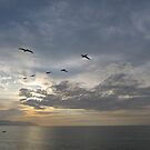 Pelicans high in the Sky in a Line - Pelícanos en Linea by PtoVallartaMex
